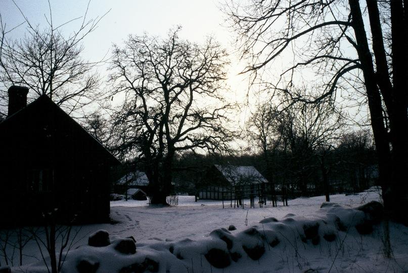 Gård med träd